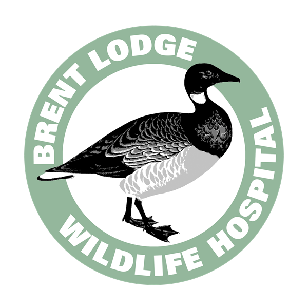 Brent Lodge Wildlife Hospital logo